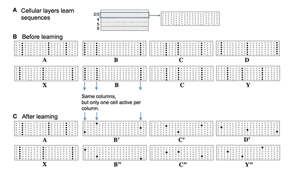 Cortical Theory - Sequence Learning