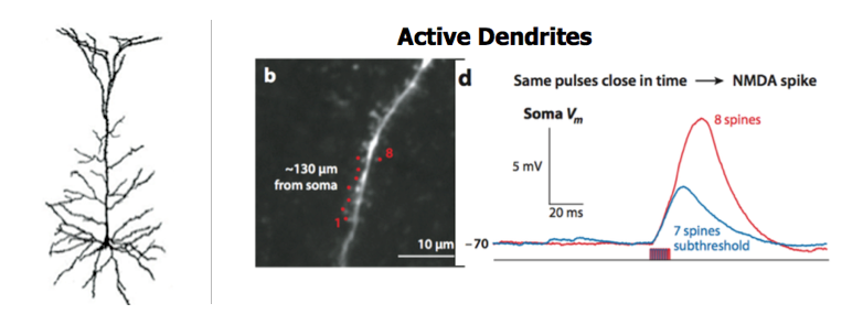 Image of Active Dendrite Firing Timing