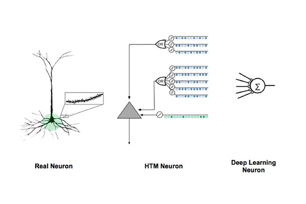 Real, HTM, and Deep Learning neurons